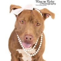 Easily adopt Storm at :shelter_name and be a part of the pet adoption, animal rescue and welfare movement.