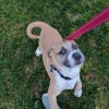 Easily adopt Maia at :shelter_name and be a part of the pet adoption, animal rescue and welfare movement.