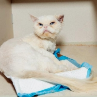 Easily adopt Vidal Sassoon at Brooklyn Bridge Animal Welfare Coalition, Inc. and be a part of the pet adoption, animal rescue and welfare movement.