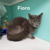 Easily adopt Fiora  HOME OR FOSTER NEEDED at Almost Home Animal Rescue and be a part of the pet adoption, animal rescue and welfare movement.
