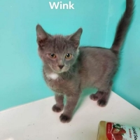 Easily adopt Wink at Almost Home Animal Rescue and be a part of the pet adoption, animal rescue and welfare movement.