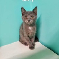 Easily adopt Berry HOME OR FOSTER NEEDED at Almost Home Animal Rescue and be a part of the pet adoption, animal rescue and welfare movement.