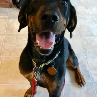 Easily adopt Jerry Lee at Gentle Jake's Coonhound Rescue and be a part of the pet adoption, animal rescue and welfare movement.