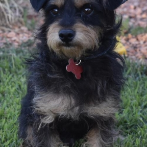 Easily adopt Enchilada at Doggie Protective Services and be a part of the pet adoption, animal rescue and welfare movement.