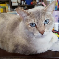 Easily adopt Blanca at :shelter_name and be a part of the pet adoption, animal rescue and welfare movement.