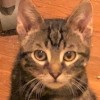 Easily adopt Billy at Kitty City KS and be a part of the pet adoption, animal rescue and welfare movement.
