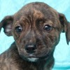 Easily adopt Armani Clark at Joyful Rescues, Inc. and be a part of the pet adoption, animal rescue and welfare movement.