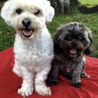 Easily adopt Brooksie & Charlie Mae at :shelter_name and be a part of the pet adoption, animal rescue and welfare movement.