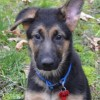 Easily adopt Sadie at :shelter_name and be a part of the pet adoption, animal rescue and welfare movement.