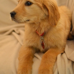 Easily adopt Honey at Good Dog Rescue and be a part of the pet adoption, animal rescue and welfare movement.