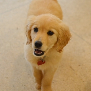 Easily adopt Blondie at Good Dog Rescue and be a part of the pet adoption, animal rescue and welfare movement.