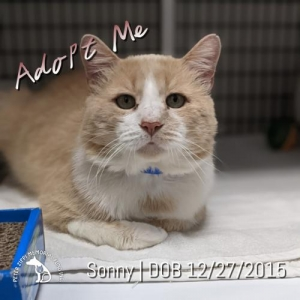 Easily adopt Sonny at Peter Zippi Fund For Animals and be a part of the pet adoption, animal rescue and welfare movement.