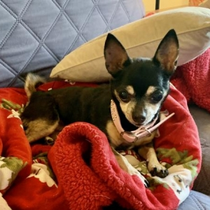 Easily adopt Winnie at Five Freedoms Farm and be a part of the pet adoption, animal rescue and welfare movement.