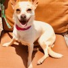 Easily adopt Zeke at Guardian Angel Dog Rescue and be a part of the pet adoption, animal rescue and welfare movement.
