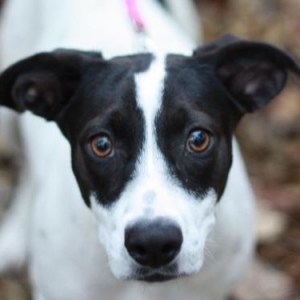 Easily adopt Sweet Sally *MEET NOV 10* at A.A.R.F. - All About Rescue and Fixin' Inc. and be a part of the pet adoption, animal rescue and welfare movement.
