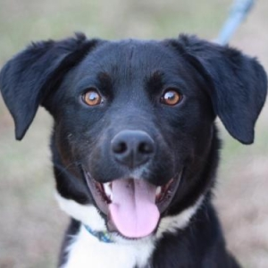 Easily adopt Katy at A.A.R.F. - All About Rescue and Fixin' Inc. and be a part of the pet adoption, animal rescue and welfare movement.