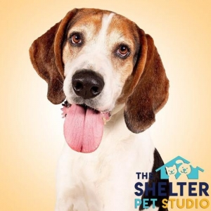 Easily adopt Elwood at Rose's Rescue and be a part of the pet adoption, animal rescue and welfare movement.