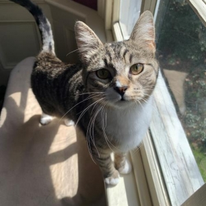 Easily adopt Prancer at Philadelphia Animal Welfare Society and be a part of the pet adoption, animal rescue and welfare movement.