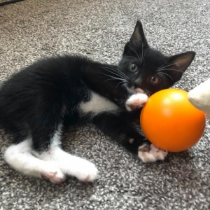 Easily adopt Ruto at Philadelphia Animal Welfare Society and be a part of the pet adoption, animal rescue and welfare movement.