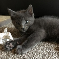 Easily adopt Mipha at :shelter_name and be a part of the pet adoption, animal rescue and welfare movement.