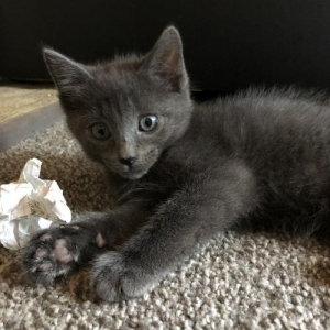 Easily adopt Mipha at Philadelphia Animal Welfare Society and be a part of the pet adoption, animal rescue and welfare movement.