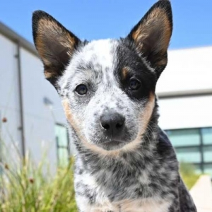 Easily adopt Ally-oop at Helen Woodward Animal Center and be a part of the pet adoption, animal rescue and welfare movement.