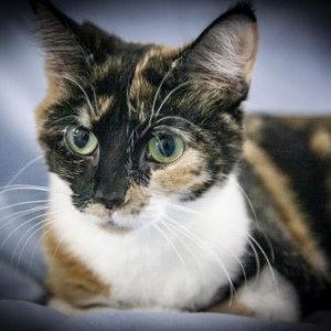 Easily adopt Alicia at Feline/Canine Friends, Inc. and be a part of the pet adoption, animal rescue and welfare movement.