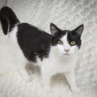 Easily adopt Sundance at Feline/Canine Friends, Inc. and be a part of the pet adoption, animal rescue and welfare movement.