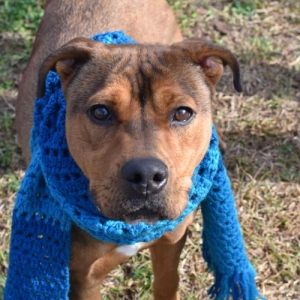 Easily adopt Prince at Worthy Dog Rescue and be a part of the pet adoption, animal rescue and welfare movement.