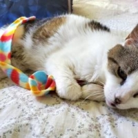 Easily adopt Gladys at :shelter_name and be a part of the pet adoption, animal rescue and welfare movement.