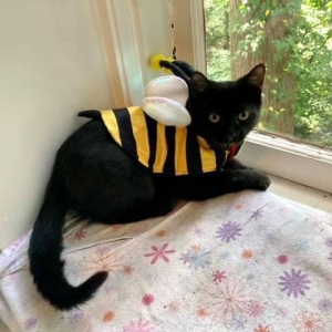 Easily adopt Bumblebee at Project M.E.O.W. and be a part of the pet adoption, animal rescue and welfare movement.