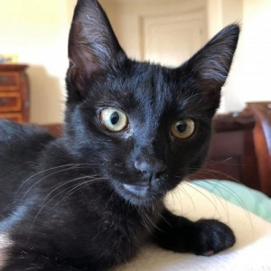Easily adopt Dipstick -- CEREBELLAR HYPOPLASIA (MILD) at Umbrella of Hope and be a part of the pet adoption, animal rescue and welfare movement.