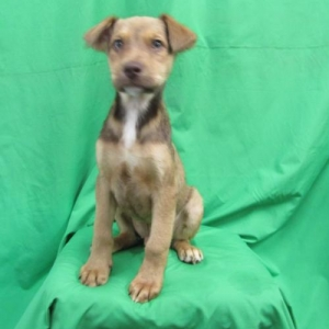 Easily adopt Tanner at Baja Dog Rescue and be a part of the pet adoption, animal rescue and welfare movement.