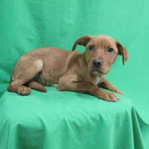 Easily adopt Lulu at Baja Dog Rescue and be a part of the pet adoption, animal rescue and welfare movement.