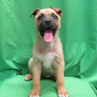 Easily adopt Tangie at :shelter_name and be a part of the pet adoption, animal rescue and welfare movement.