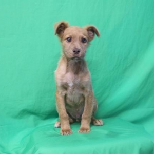 Easily adopt Bram at Baja Dog Rescue and be a part of the pet adoption, animal rescue and welfare movement.