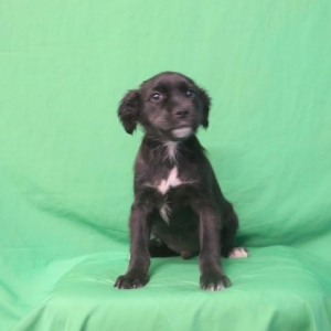 Easily adopt Elmo at Baja Dog Rescue and be a part of the pet adoption, animal rescue and welfare movement.