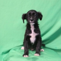 Easily adopt Johan at :shelter_name and be a part of the pet adoption, animal rescue and welfare movement.
