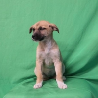 Easily adopt Aria at :shelter_name and be a part of the pet adoption, animal rescue and welfare movement.