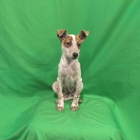 Easily adopt Kiefer at Baja Dog Rescue and be a part of the pet adoption, animal rescue and welfare movement.