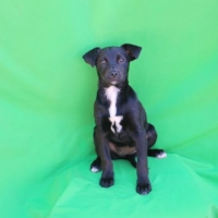 Easily adopt Willow at :shelter_name and be a part of the pet adoption, animal rescue and welfare movement.