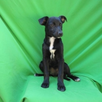 Easily adopt Arya at :shelter_name and be a part of the pet adoption, animal rescue and welfare movement.