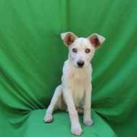 Easily adopt Nestle at :shelter_name and be a part of the pet adoption, animal rescue and welfare movement.