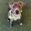 Easily adopt Zip at :shelter_name and be a part of the pet adoption, animal rescue and welfare movement.