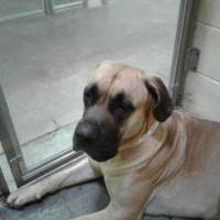 Easily adopt Mary Jane at :shelter_name and be a part of the pet adoption, animal rescue and welfare movement.