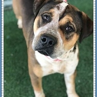 Easily adopt Chunk Bonded to Cookie at :shelter_name and be a part of the pet adoption, animal rescue and welfare movement.