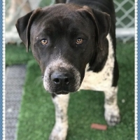 Easily adopt Cookie bonded to Chunk at :shelter_name and be a part of the pet adoption, animal rescue and welfare movement.