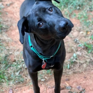 Easily adopt Penelope Urgently needs Foster or Adopter at Doggie Harmony and be a part of the pet adoption, animal rescue and welfare movement.
