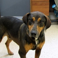 Easily adopt Cedar at Richardson Rescue and be a part of the pet adoption, animal rescue and welfare movement.