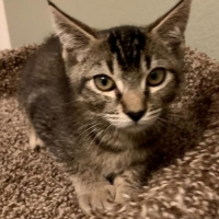 Easily adopt Kuumba at :shelter_name and be a part of the pet adoption, animal rescue and welfare movement.